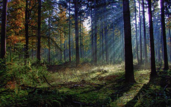 Проект лесного участка, дендрологическое обследование насаждений, услуги по лесоводству